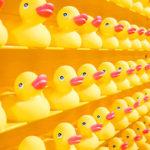 How to make a quacking first impression