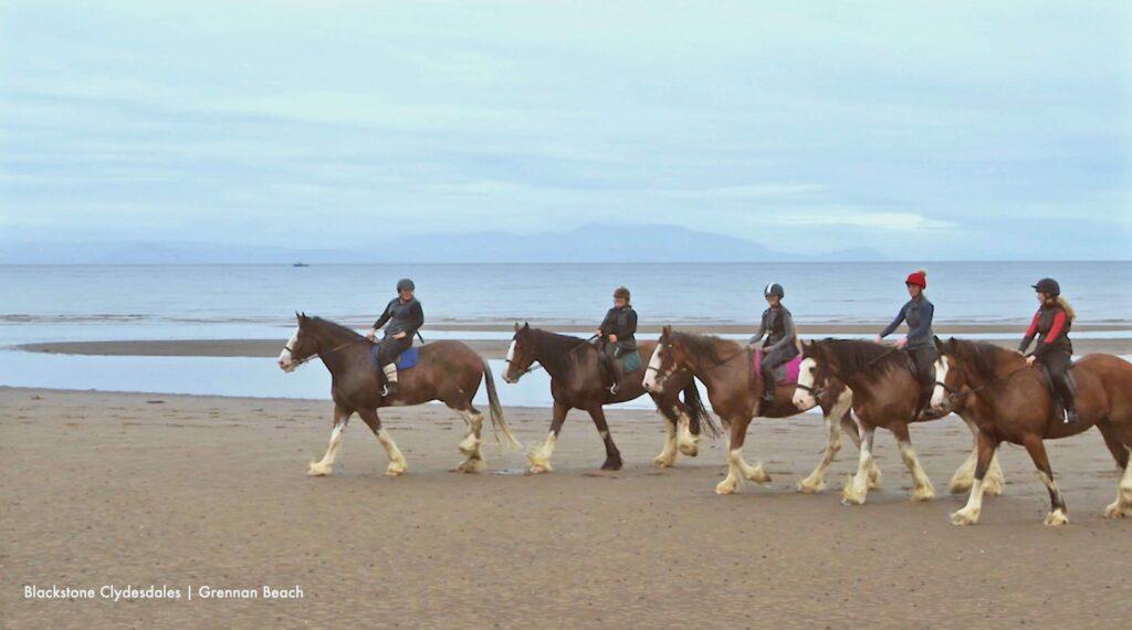 SSDA Horses
